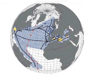 #58. El atún y el Mediterráneo. Familia escombridae